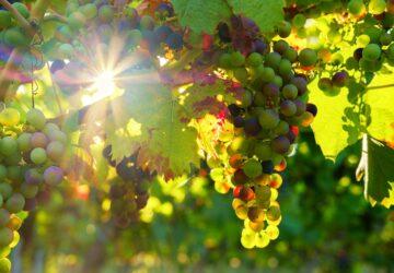 bpv radila prodejci prémiových vín 8Wines